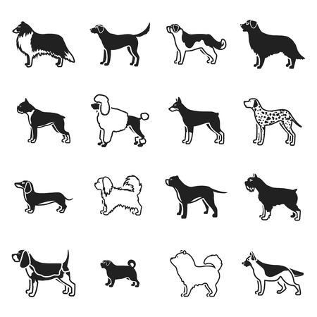 saint bernard: Dog breeds set icons in black style. Big collection dog breeds vector symbol stock Illustration