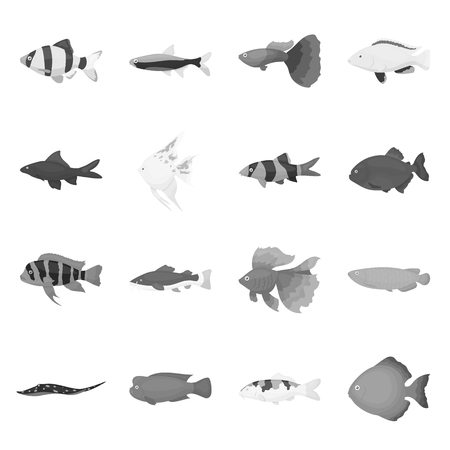 poecilia: Aquarium fish set icons in monochrome style. Big collection of aquarium fish vector symbol stock Illustration
