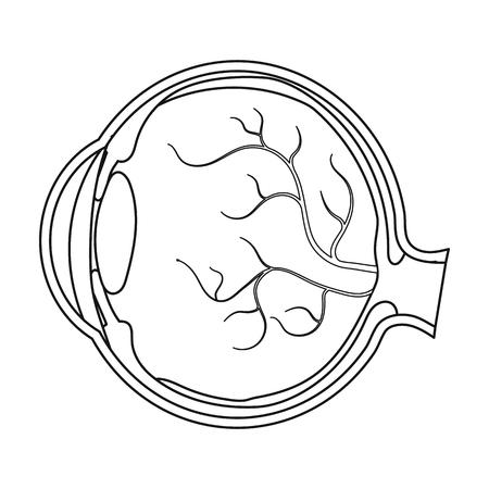 sclera: Eyeball icon in outline style isolated on white background. Organs symbol vector illustration. Illustration