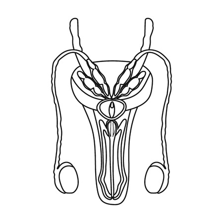 genitalia: Male reproductive system icon in outline style isolated on white background. Organs symbol vector illustration.