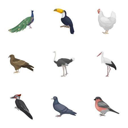 woodpecker: Bird set icons in cartoon style. Big collection of bird vector symbol stock