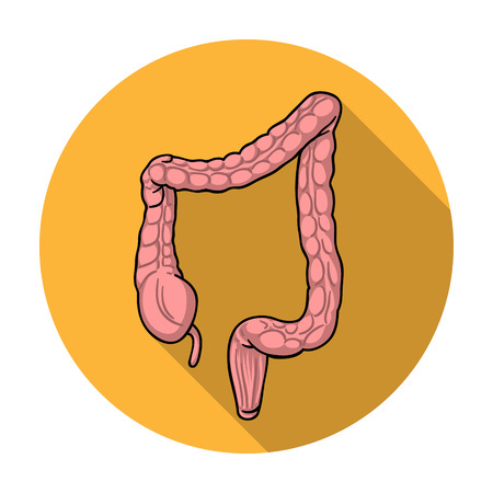Human large intestine icon in flat style isolated on white background. Human organs symbol vector illustration.