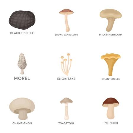 morel: Mushroom set icons in cartoon style. Big collection of mushroom vector symbol stock