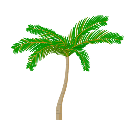 Mexican fan palm icon in cartoon style isolated on white background. Mexico country symbol vector illustration. Illustration