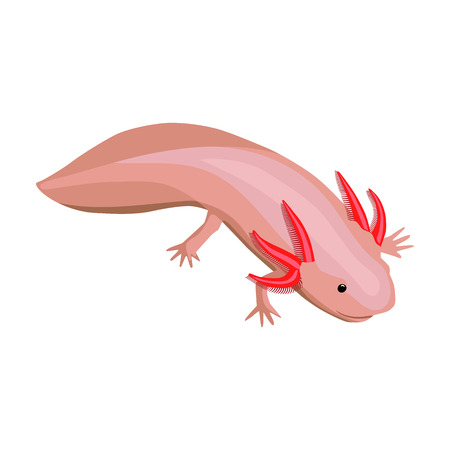 Mexican axolotl icon in cartoon style isolated on white background. Mexico country symbol vector illustration. Illustration