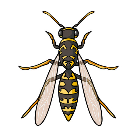wasp: Wasp icon in cartoon design isolated on white background. Insects symbol stock vector illustration. Illustration
