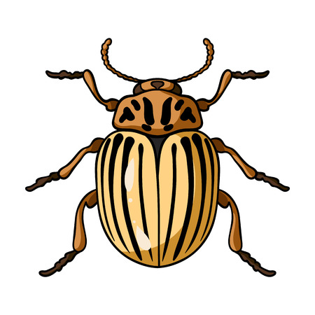 Kartoffelkäfer Symbol im Cartoon-Design auf weißem Hintergrund. Insekten-Symbol Vektor-Illustration.