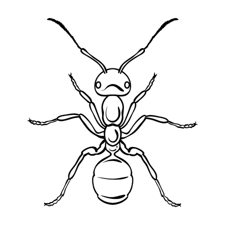 Ant icon in outline design isolated on white background. Insects symbol stock vector illustration. Illustration