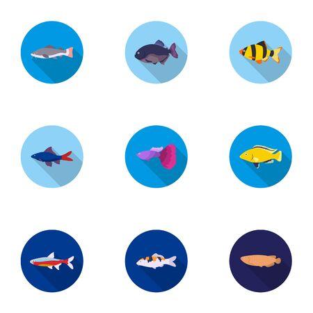cichlid: Aquarium fish set icons in flat style. Big collection of aquarium fish vector symbol stock illustration