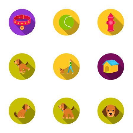 Dog equipment set icons in flat style. Big collection dog equipment vector symbol stock illustration