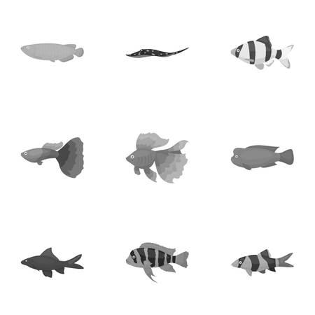 cichlid: Aquarium fish set icons in monochrome style. Big collection of aquarium fish vector symbol stock illustration Illustration