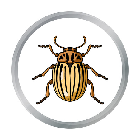 Colorado beetle icon in cartoon style isolated on white background. Insects symbol stock vector illustration. Illustration