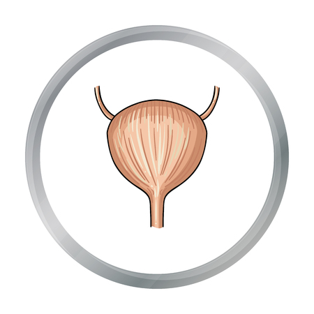 urinary bladder: Human urinary bladder icon in cartoon style isolated on white background. Human organs symbol stock vector illustration.