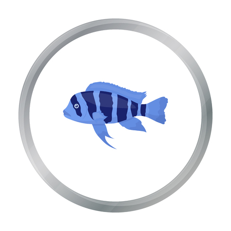 large cichlid: Frontosa Cichlid (Cyphotilapia Frontosa) fish icon cartoon. Singe aquarium fish icon from the sea,ocean life cartoon. Illustration