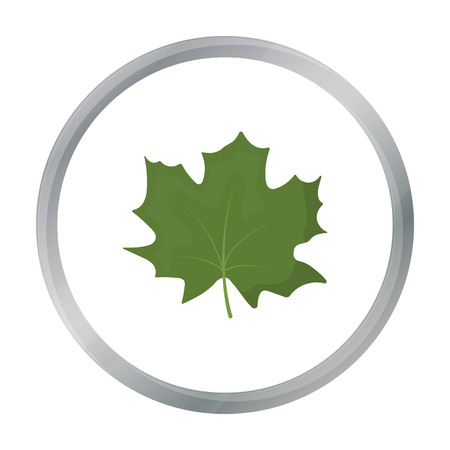 halifax: Maple Leaf vector icon in cartoon style for web