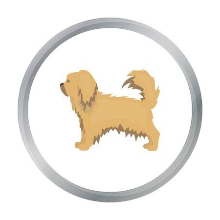 pekingese: Pekingese vector icon in cartoon style for web