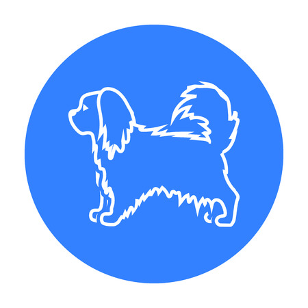 dog walking: Pekingese vector icon in black style for web Illustration