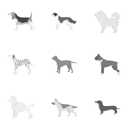 labrador: Dog breeds set icons in monochrome style. Big collection of dog breeds vector symbol stock illustration