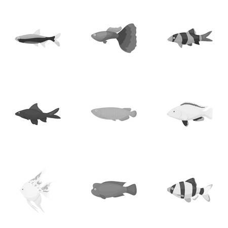 neon fish: Aquarium fish set icons in monochrome style. Big collection of aquarium fish vector symbol stock illustration Illustration