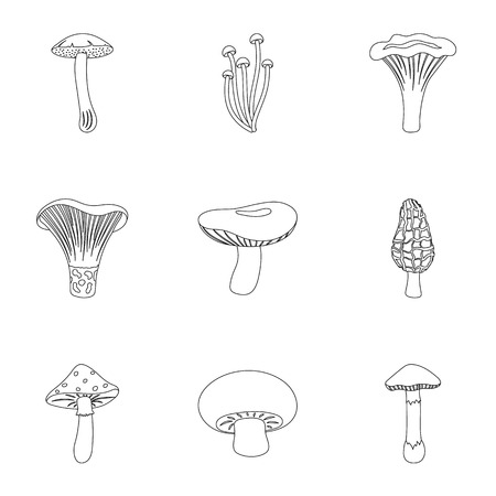 morel: Mushroom set icons in outline style. Big collection of mushroom vector symbol stock illustration