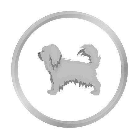pekingese: Pekingese vector icon in monochrome style for web Illustration