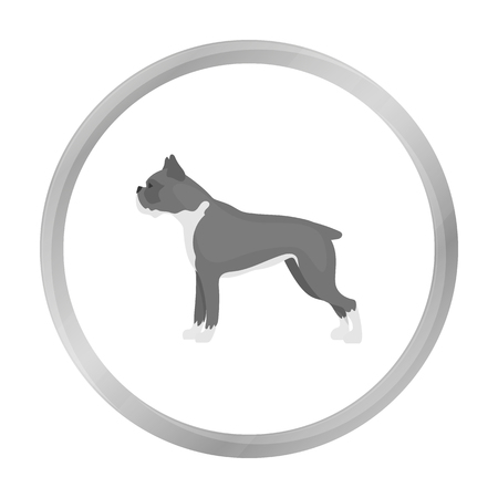 boxer dog: Boxer dog vector icon in monochrome style for web