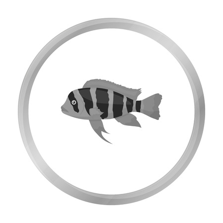 Frontosa Cichlid (Cyphotilapia Frontosa) fish icon monochrome. Singe aquarium fish icon from the sea,ocean life monochrome. Illustration