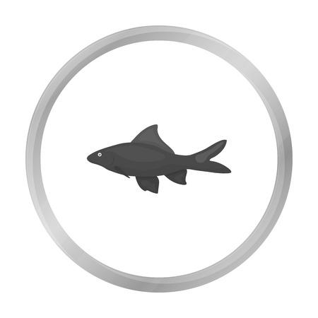 shark catfish: Red Tail Shark fish icon monochrome. Singe aquarium fish icon from the sea,ocean life monochrome.