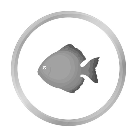 cichlid: Discus fish icon monochrome. Singe aquarium fish icon from the sea,ocean life monochrome. Illustration
