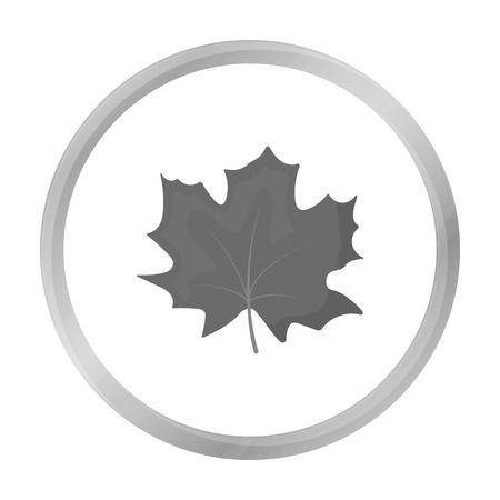 halifax: Maple Leaf vector icon in monochrome style for web