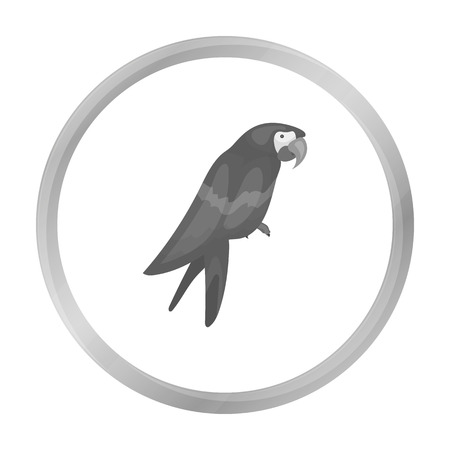 pampered: Pirates parrot icon in monochrome style isolated on white background. Pirates symbol stock vector illustration. Illustration