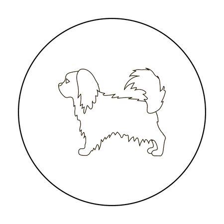 pekingese: Pekingese vector icon in outline style for web Illustration
