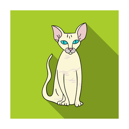 Peterbald icon in flat style isolated on white background. Cat breeds symbol stock vector illustration. Illustration