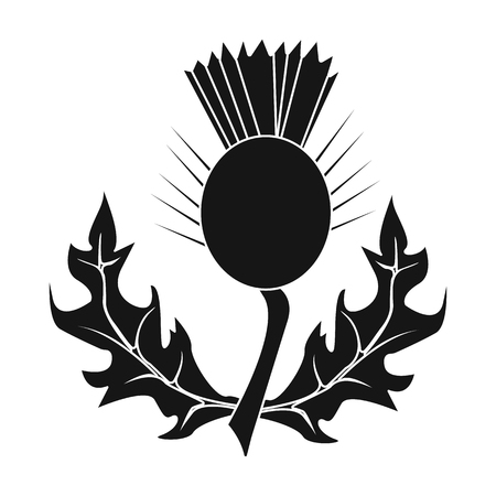 Thistles with green leaves.Medicinal plant of Scotland.Scotland single icon in black style vector symbol stock illustration.
