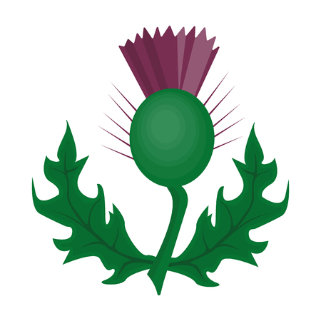Thistles with green leaves.Medicinal plant of Scotland.Scotland single icon in cartoon style vector symbol stock illustration.