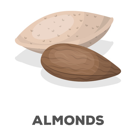 Almonds.Different kinds of nuts single icon in cartoon style vector symbol stock illustration. Imagens - 75968494
