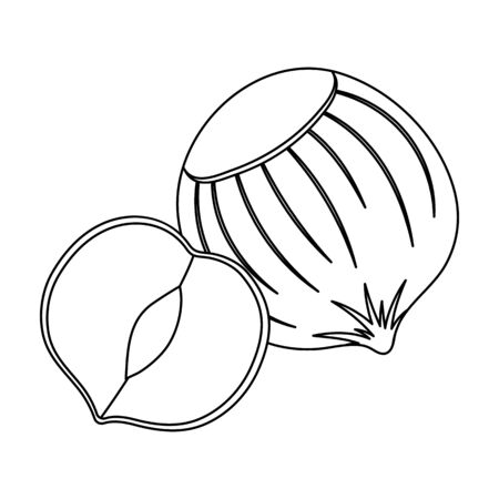 Hazelnuts in shell.Different kinds of nuts single icon in outline style vector symbol stock illustration. Illustration
