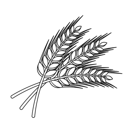 Sprigs of wheat. Plant for brewing beer. Pub single icon in outline style vector symbol stock illustration.