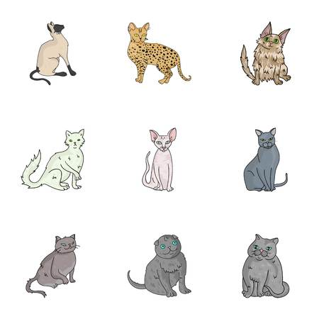 Collection of cats in one picture. Different cats in one picture. Cat breeds icon in set collection on cartoon style vector symbol stock illustration. Illustration
