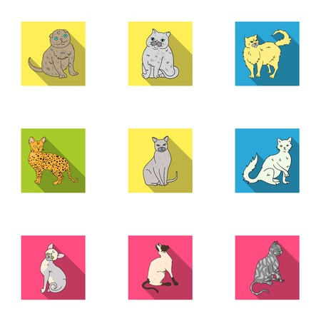 grey cat: Collection of cats in one picture. Different cats in one picture. Cat breeds icon in set collection on flat style vector symbol stock illustration.