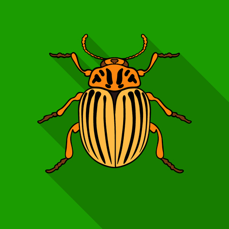 Colorado beetle icon in flat style isolated on white background. Insects symbol stock vector illustration.