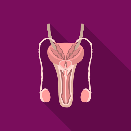 Male reproductive system icon in flat style isolated on white background. Organs symbol stock vector illustration.