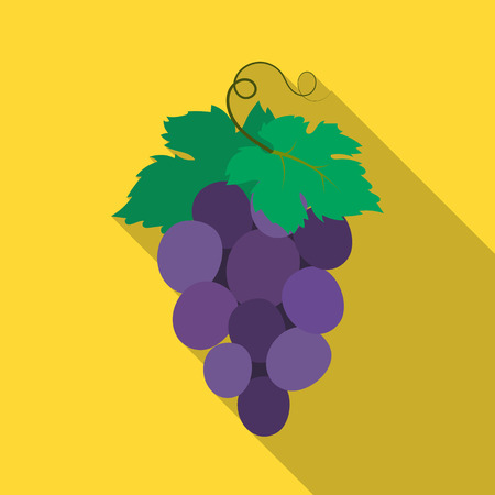 concord: Bunch of wine grapes icon in flate style isolated on white background. Spain country symbol stock vector illustration. Illustration