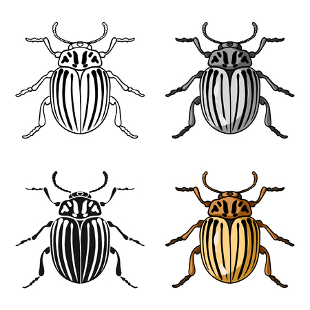 Colorado beetle icon in cartoon style isolated on white background. Insects symbol stock vector illustration. Çizim