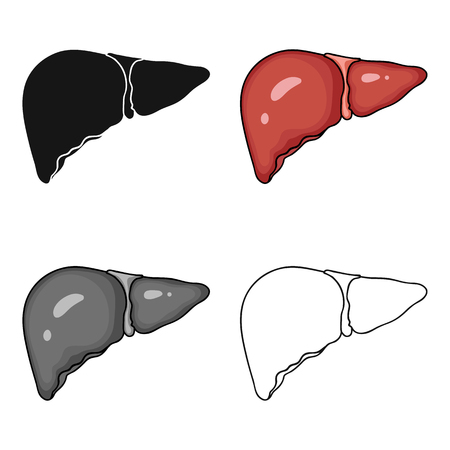 Human liver icon in cartoon style isolated. Human organs symbol vector illustration.