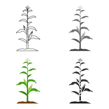 corncob: Corn icon cartoon. Single plant icon from the big farm, garden, agriculture cartoon.