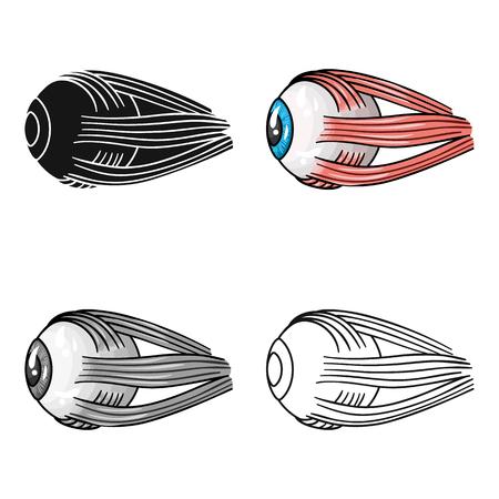 Human eyeball icon in cartoon style isolated on white background. Human organs symbol stock vector illustration.