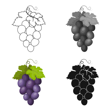 concord: Bunch of wine grapes icon in cartoon style isolated on white background. Spain country symbol stock vector illustration. Illustration
