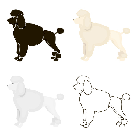 Poodle vector icon in cartoon style for web Illustration