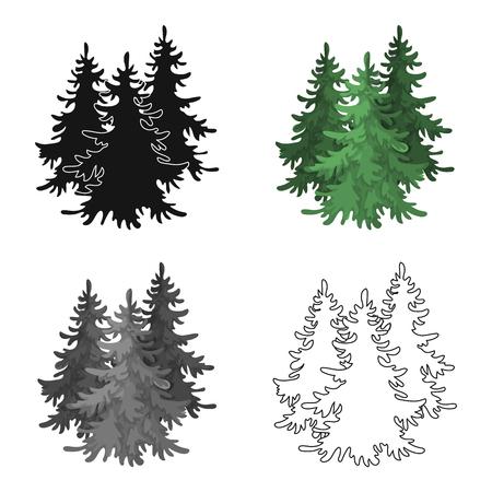 cypress: Canadian spruce. Canada single icon in cartoon style vector symbol stock illustration web.